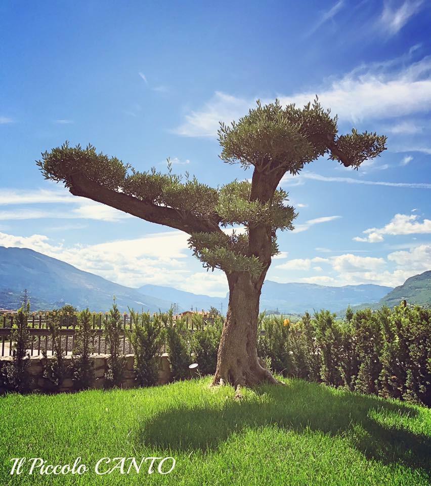 albero-cielo