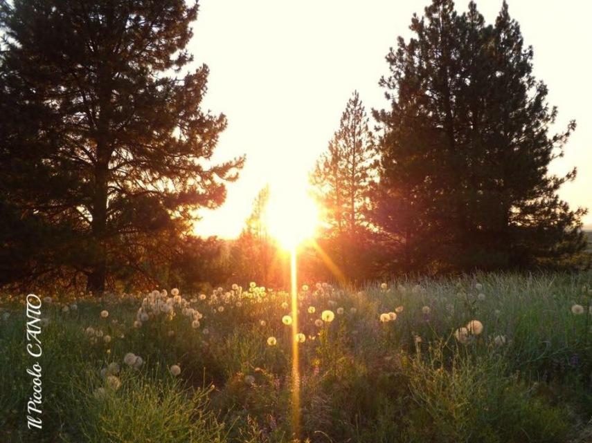 Yosemite-california
