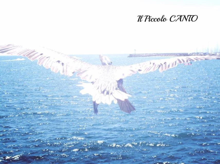 california-pellicano-mare